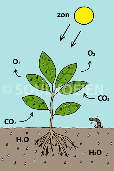 plant-leven.jpg